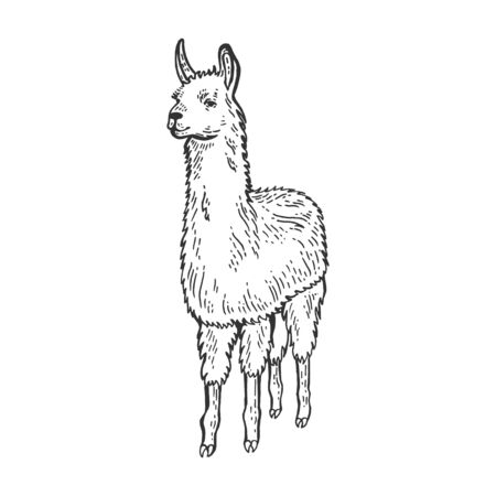 Llama animal sketch engraving vector illustration. Isolated image on white background. Scratch board style imitation. Hand drawn image.