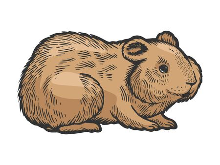 Hamster rodent pet animal color sketch engraving vector illustration. Scratch board style imitation. Hand drawn image.