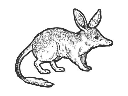 Bandicoot animal sketch engraving vector illustration. Scratch board style imitation. Hand drawn image.