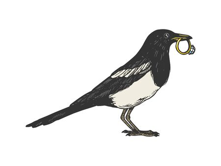Magpie bird with golden ring animal color sketch engraving vector illustration. Scratch board style imitation. Black and white hand drawn image.