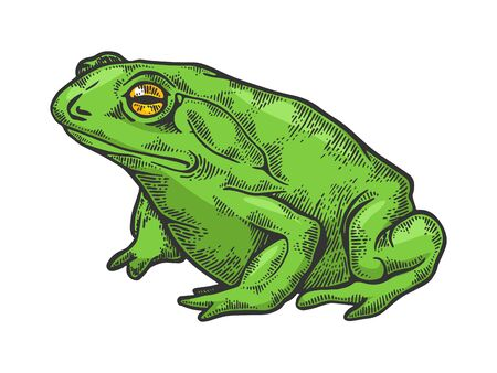Hallucinogenic frog toad animal color sketch engraving vector illustration. Scratch board style imitation. Black and white hand drawn image. Stock Vector - 125534014