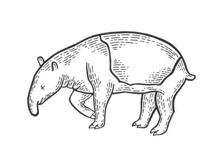 Tapir animal sketch engraving vector illustration. Scratch board style imitation. Hand drawn image.