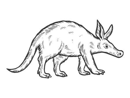 Dibujo de animal oso hormiguero grabado ilustración vectorial. Imitación de tablero de rascar. Imagen dibujada a mano.
