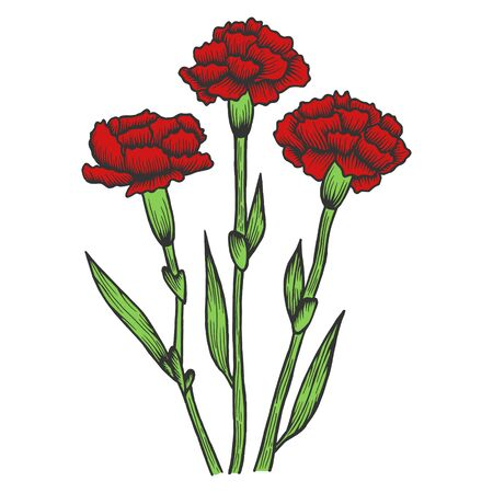 Dianthus carnation flowers color sketch engraving vector illustration. Scratch board style imitation. Hand drawn image.