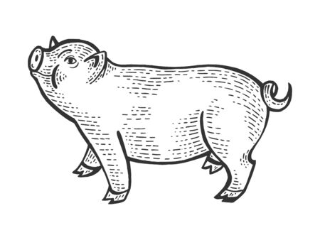 Piggy animal sketch engraving vector illustration. Scratch board style imitation. Black and white hand drawn image. Banco de Imagens - 128502748