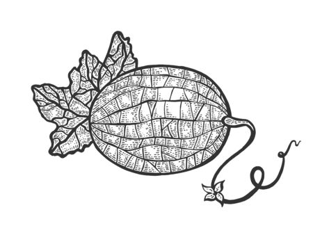 Melon fruit plant sketch engraving vector illustration. Scratch board style imitation. Hand drawn image.