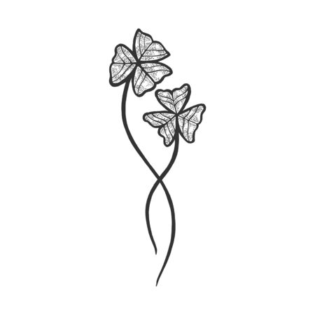 Oxalis green plant sketch engraving vector illustration. Scratch board style imitation. Hand drawn image.