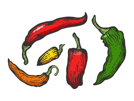Peppers color sketch engraving vector illustration. Scratch board style imitation. Hand drawn image. Stock Illustratie