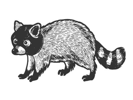 Raccoon in hat balaclava sketch engraving vector illustration. Scratch board style imitation. Black and white hand drawn image. Иллюстрация