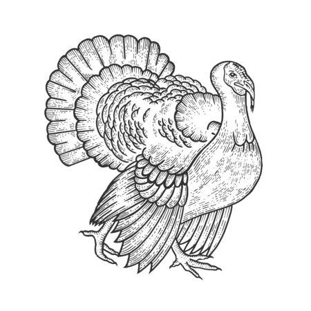 Turkey bird sketch engraving vector illustration. Scratch board style imitation. Hand drawn image.