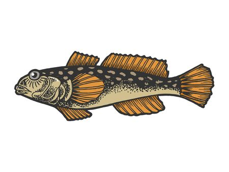Goby fish animal color sketch engraving vector illustration. Tee shirt apparel print design. Ilustração