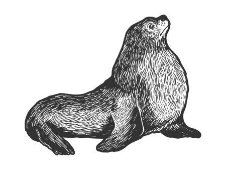 Sea lion seal male animal sketch engraving vector illustration. Scratch board style imitation Stock fotó - 129594642