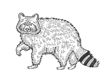 Raccoon animal sketch engraving vector illustration. Tee shirt apparel print design.
