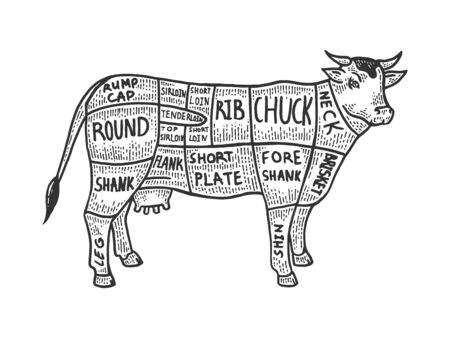 Meat diagram cow sketch engraving vector illustration. Scratch board style imitation. Black and white hand drawn image.