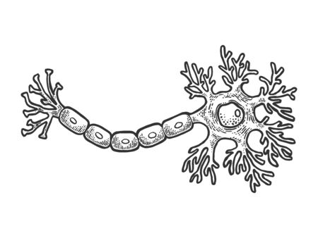 Menschliche Neuron-Nervenzelle des Gehirns schematische Vintage-Skizze-Gravur-Vektor-Illustration. T-Shirt Bekleidung Print-Design. Nachahmung im Scratchboard-Stil. Handgezeichnetes Schwarz-Weiß-Bild.