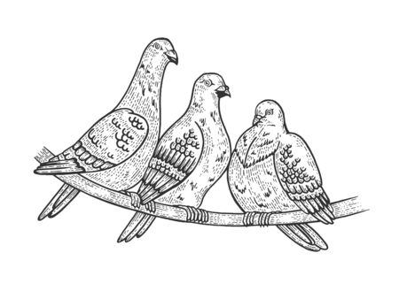 Pigeon birds sketch engraving vector illustration. Scratch board style imitation. Black and white hand drawn image.