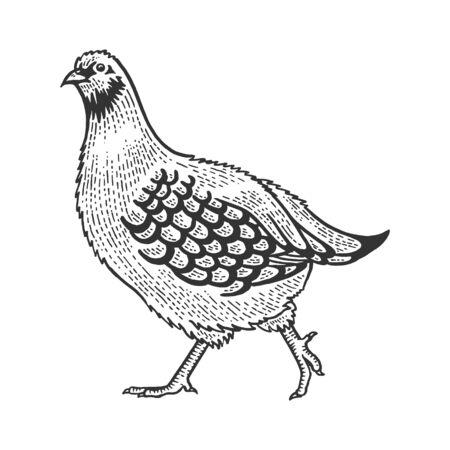 Partridge Perdix bird sketch engraving vector illustration. Tee shirt apparel print design. Scratch board style imitation. Hand drawn image. Vettoriali