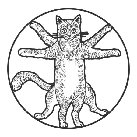 Vitruvian cat sketch engraving vector illustration. Tee shirt apparel print design. Scratch board style imitation. Black and white hand drawn image.