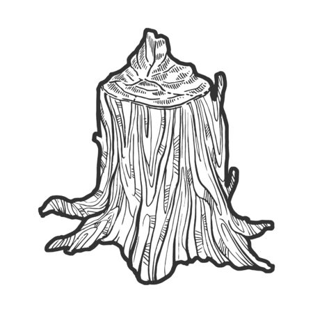 Stump of tree made by beaver animal sketch engraving vector illustration. Tee shirt apparel print design. Scratch board style imitation. Black and white hand drawn image.