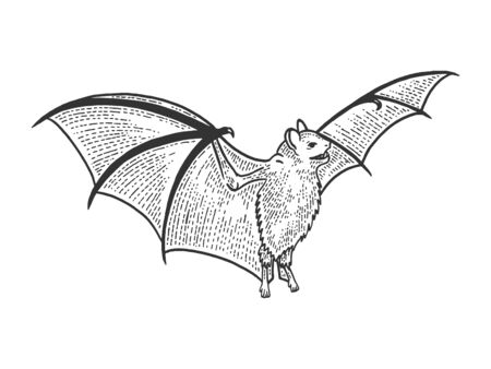 Flying bat sketch engraving vector illustration. Tee shirt apparel print design. Scratch board style imitation. Black and white hand drawn image.
