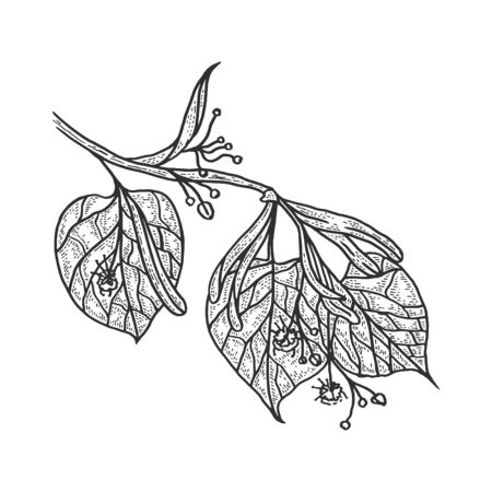 Linden branch sketch engraving vector illustration. T-shirt apparel print design. Scratch board style imitation. Black and white hand drawn image. 向量圖像