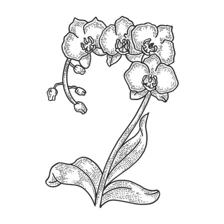 Orchid flower sketch engraving vector illustration. T-shirt apparel print design. Scratch board style imitation. Black and white hand drawn image.
