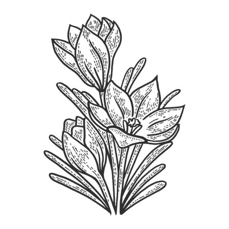 Crocus flower sketch engraving vector illustration. T-shirt apparel print design. Scratch board style imitation. Black and white hand drawn image.