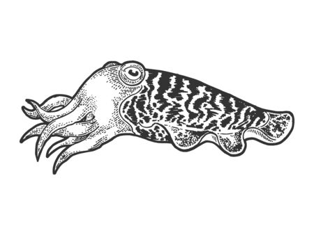 Cuttlefish marine mollusc animal sketch engraving vector illustration. T-shirt apparel print design. Scratch board style imitation. Hand drawn image.