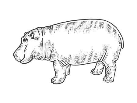 Hippopotamus animal sketch engraving vector illustration. T-shirt apparel print design. Scratch board style imitation. Black and white hand drawn image.