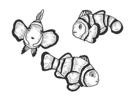 Pez payaso Amphiprion dibujo grabado ilustración vectorial. Diseño de impresión de ropa de camiseta. Imitación de tablero de rascar. Imagen dibujada a mano en blanco y negro.