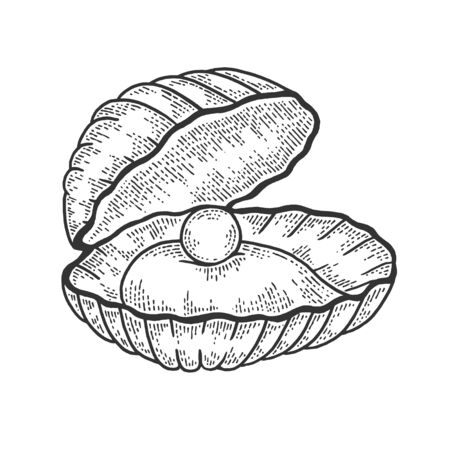 Pearl shell sketch engraving vector illustration. T-shirt apparel print design. Scratch board style imitation. Black and white hand drawn image.
