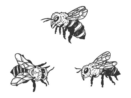 Bee insect animal sketch engraving vector illustration. T-shirt apparel print design. Scratch board style imitation. Black and white hand drawn image. Standard-Bild - 133351923