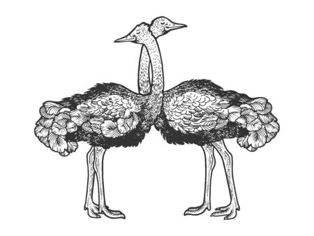Ostrich birds love couple hug sketch engraving vector illustration. T-shirt apparel print design. Scratch board style imitation. Black and white hand drawn image.