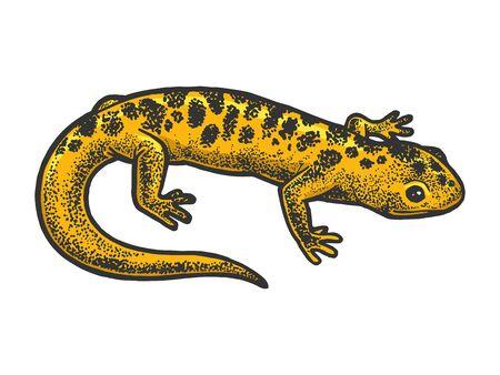 Salamander Eidechse Tierskizze Gravur Vektor-Illustration. T-Shirt-Bekleidungsdruckdesign. Nachahmung im Scratchboard-Stil. Handgezeichnetes Schwarz-Weiß-Bild.