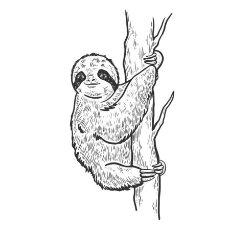 Sloth on tree sketch engraving vector illustration. T-shirt apparel print design. Scratch board style imitation. Black and white hand drawn image. Stock Illustratie