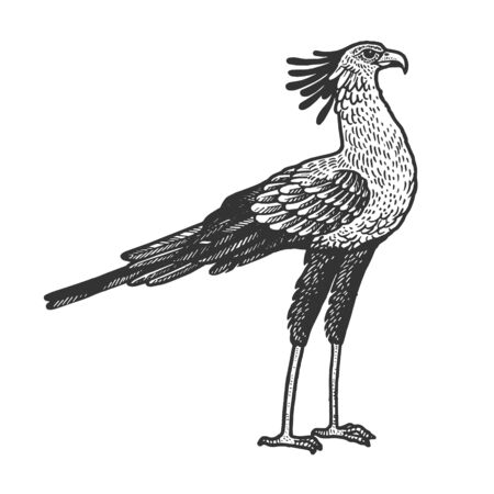 Secretary bird animal sketch engraving vector illustration. T-shirt apparel print design. Scratch board style imitation. Hand drawn image.