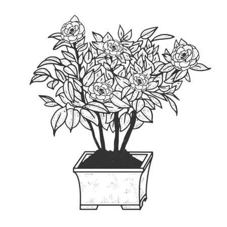 Camellia plant with flowers sketch engraving vector illustration. T-shirt apparel print design. Scratch board style imitation. Black and white hand drawn image.