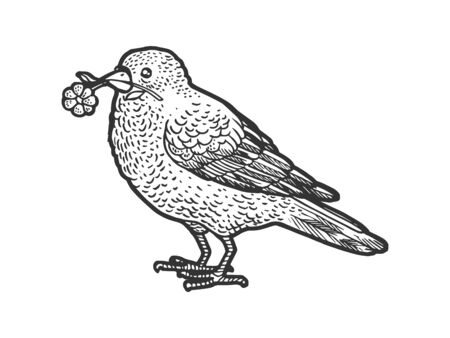 Canary bird with camomile daisy flower in beak sketch engraving vector illustration. T-shirt apparel print design. Scratch board imitation. Black and white hand drawn image.