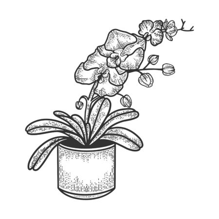 Orchid exotic tropical flower sketch engraving vector illustration. T-shirt apparel print design. Scratch board imitation. Black and white hand drawn image. Banque d'images - 139303711