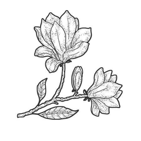 Magnolia tree flower sketch engraving vector illustration. T-shirt apparel print design. Scratch board imitation. Black and white hand drawn image. Banque d'images - 139502254