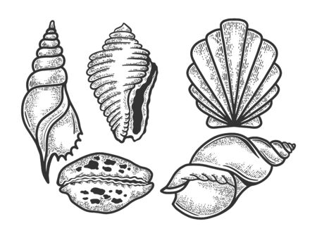 Sea shell set sketch engraving vector illustration. Scratch board style imitation. Black and white hand drawn image.