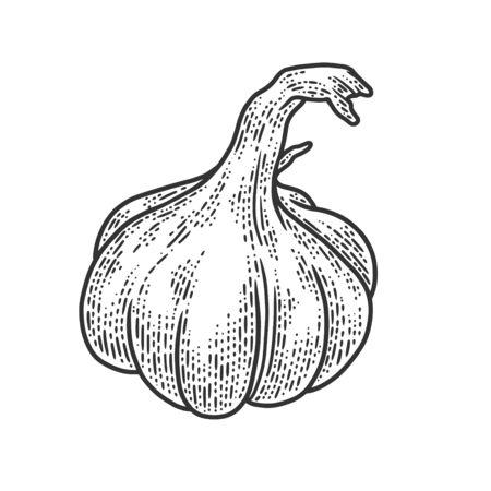 Garlic vegetable plant sketch engraving vector illustration. T-shirt apparel print design. Scratch board imitation. Black and white hand drawn image. Ilustração