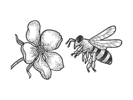 bee flies to a flower sketch engraving vector illustration. T-shirt apparel print design. Scratch board imitation. Black and white hand drawn image.