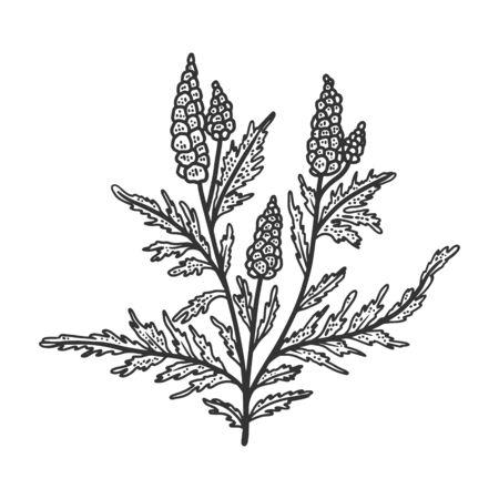 Ragweed Ambrosia plant sketch engraving vector illustration. T-shirt apparel print design. Scratch board imitation. Black and white hand drawn image. Vektoros illusztráció