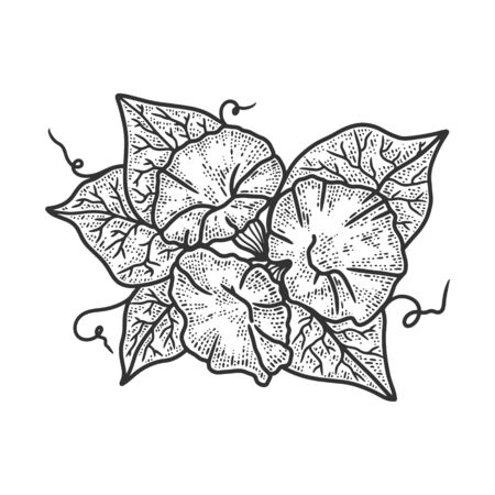morning glory Ipomoea flower sketch engraving vector illustration. T-shirt apparel print design. Scratch board imitation. Black and white hand drawn image. Иллюстрация