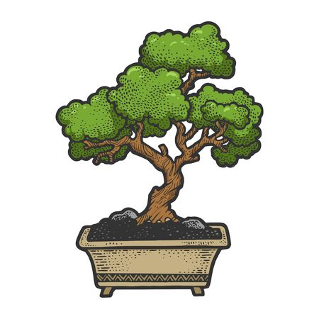 Bonsai japanese green tree color sketch vector illustration. Scratch board style imitation. Hand drawn image.