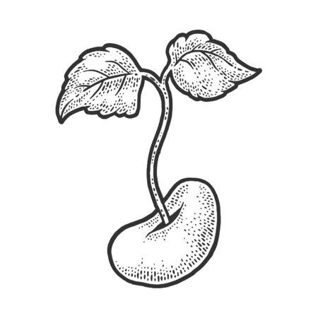 bean sprout plant sketch engraving vector illustration. T-shirt apparel print design. Scratch board imitation. Black and white hand drawn image. Vektorgrafik