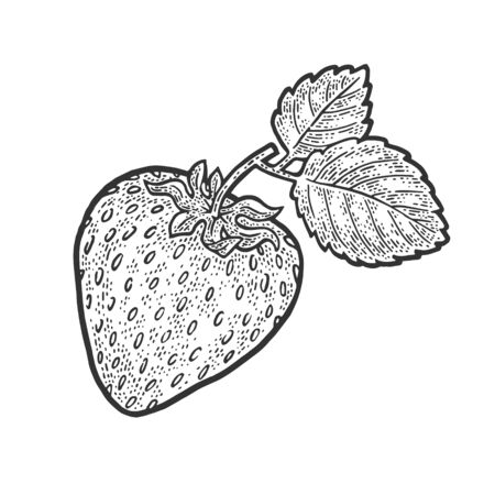 Strawberry berry fruit sketch engraving vector illustration. T-shirt apparel print design. Scratch board imitation. Black and white hand drawn image.  イラスト・ベクター素材