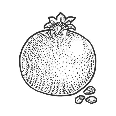 pomegranate fruit sketch engraving vector illustration. T-shirt apparel print design. Scratch board imitation. Black and white hand drawn image.