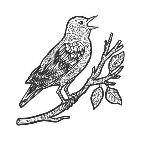 nightingale bird sketch engraving vector illustration. T-shirt apparel print design. Scratch board imitation. Black and white hand drawn image.
